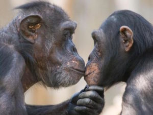 Two animals in love, supporting each other.