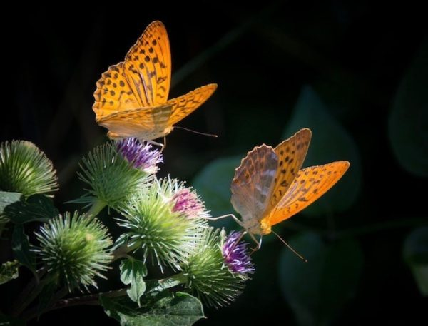 Butterflies on blooms symbolizing reinventing oneself