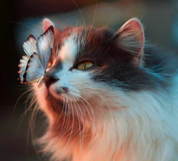 Reinvent yourself when you age, cat and butterfly connecting
